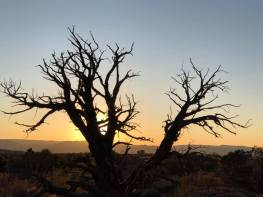 Silhouette of dead tree with sunset in background